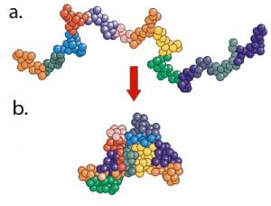Proteine-1